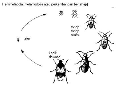 Serangga dan lingkungan ccuart Choice Image